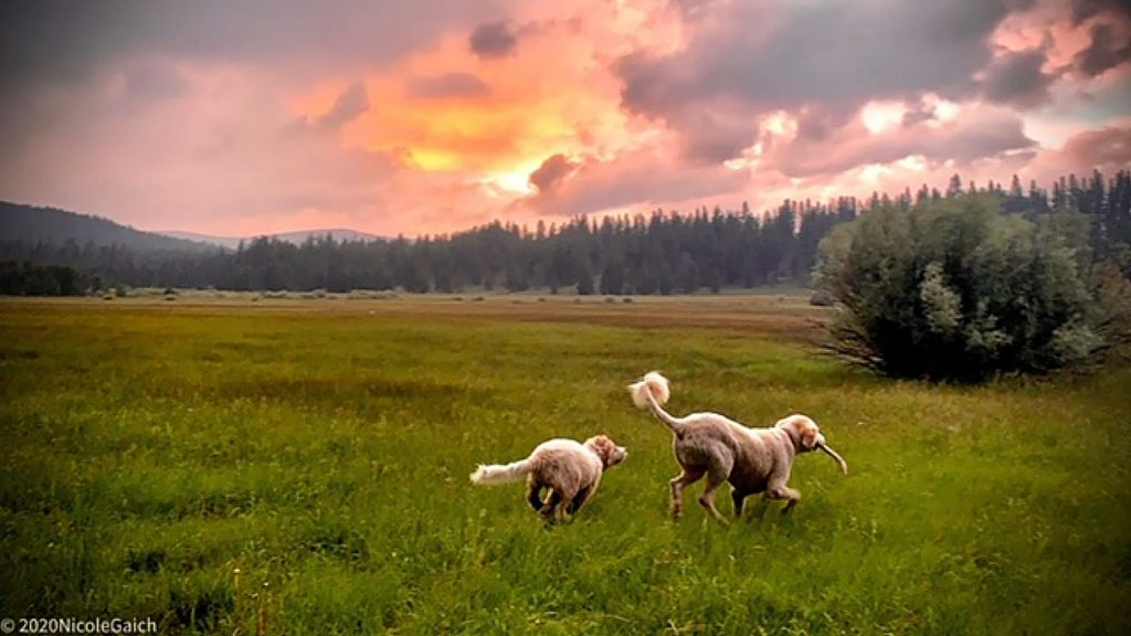 Taken June 12 out in Prosser Meadows with our pups Kaya and TaunTaun. Mother Nature provided the background setting!