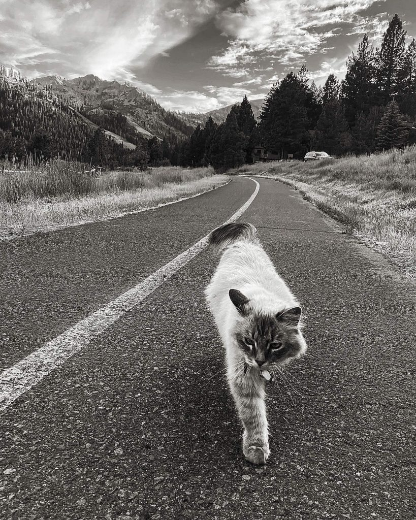 Cat Walk with that Squaw Swag.