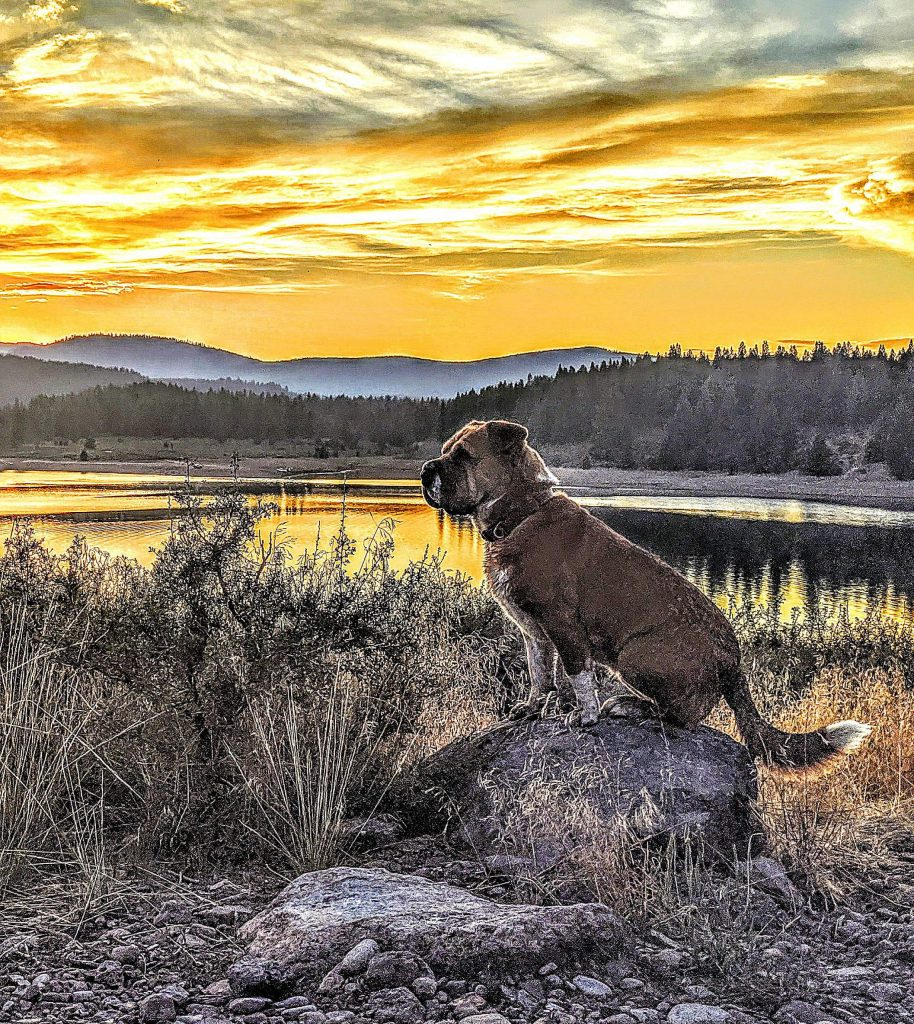 Zen puppy, Prosser Lake sunset.