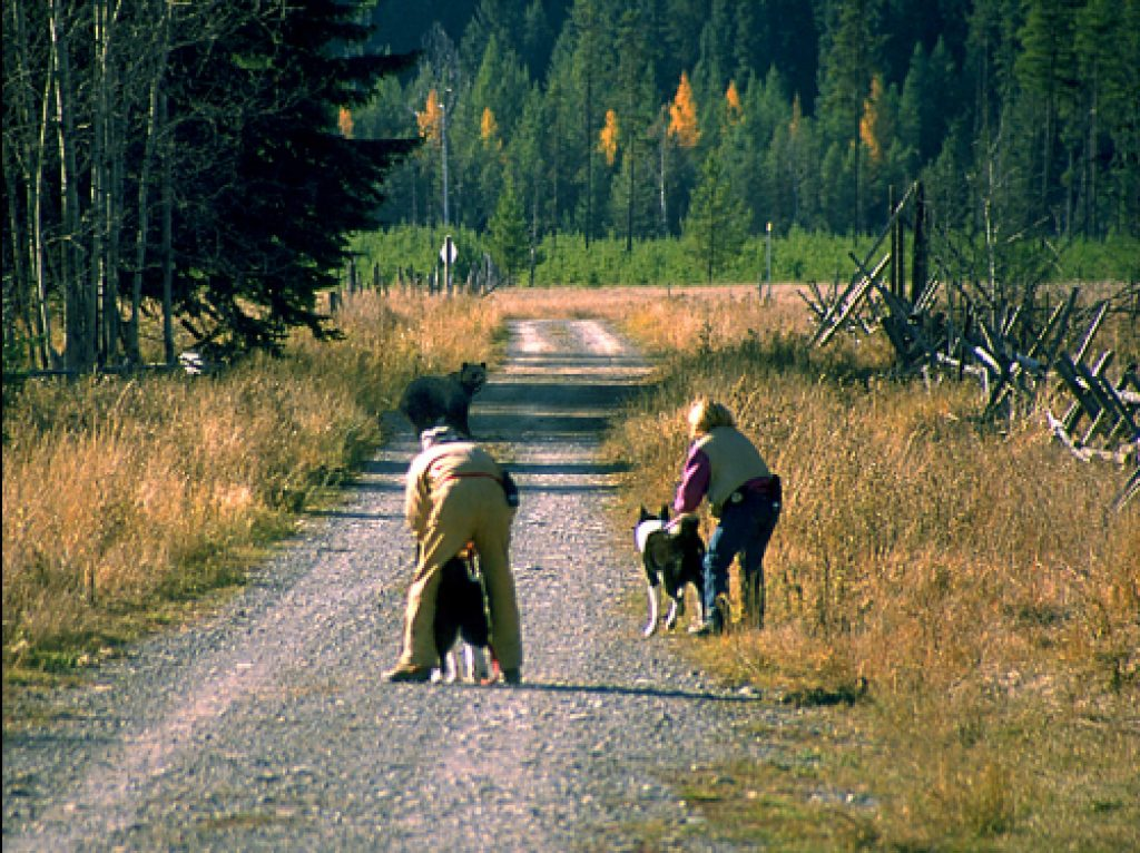Tim Manley and Carrie Hunt shepherding a grizzly bear away from the Polebridge Mercantile.