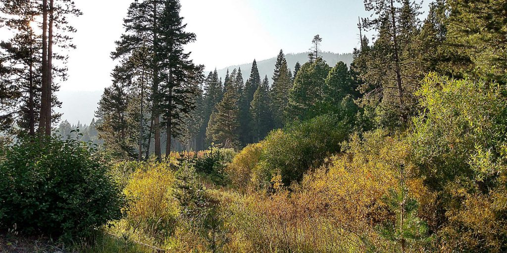 Already some color in Blackwood Canyon.