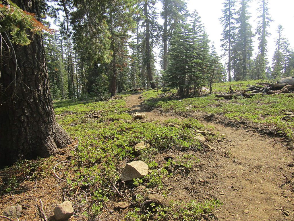 Volunteers working on a re-route near Marlette Lake.