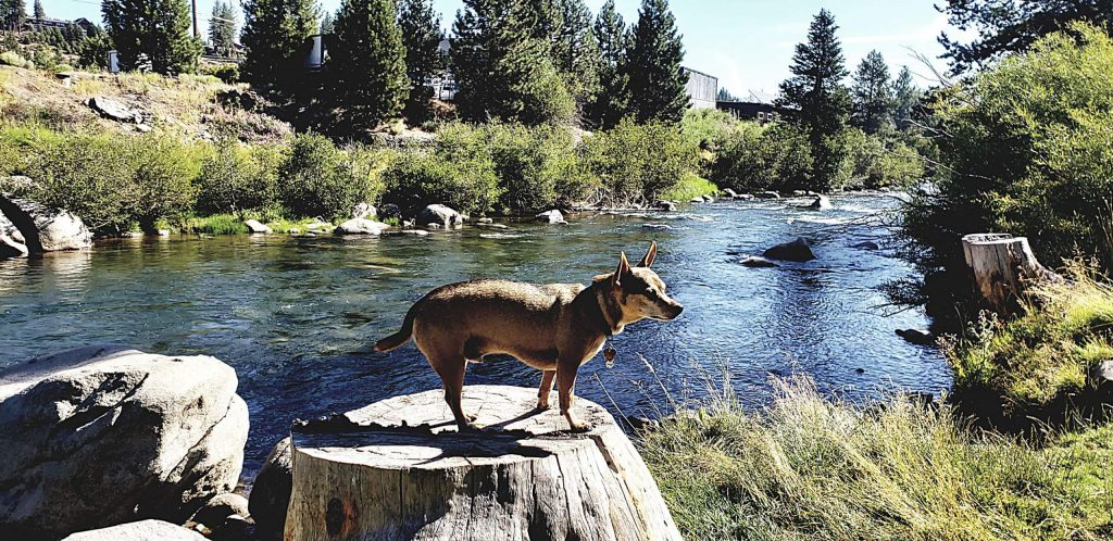 My dog buddy at the Truckee River.