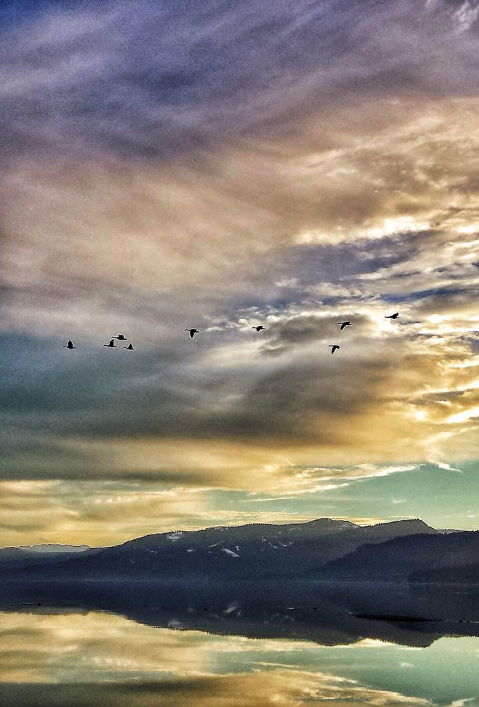 Geese over Lake Tahoe.